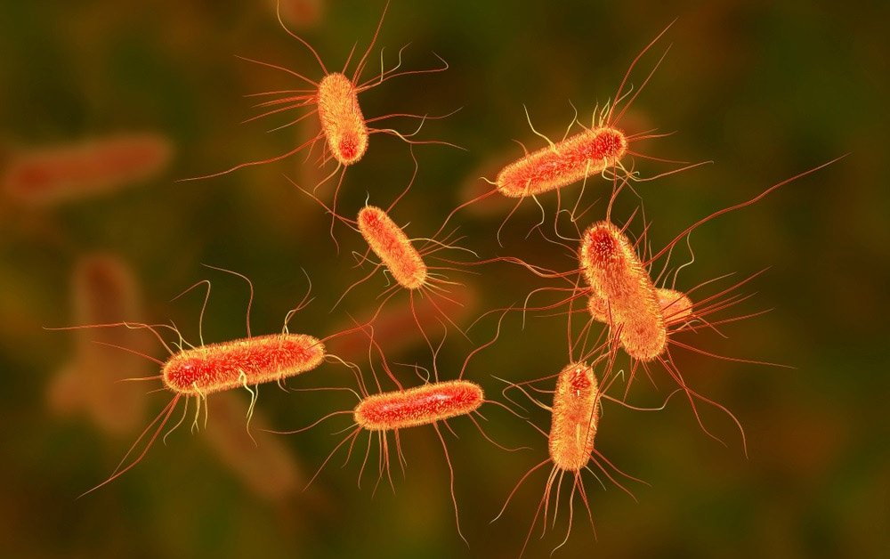 E.Coli Bacteria Infection: Simple Ways to Prevent a Deadly Complications