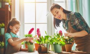 Houseplants-that-are-Good-for-your-Health-nhv